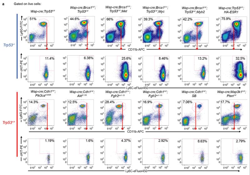 Breast cancer: P53 deletion promotes cancer cell metastasis
