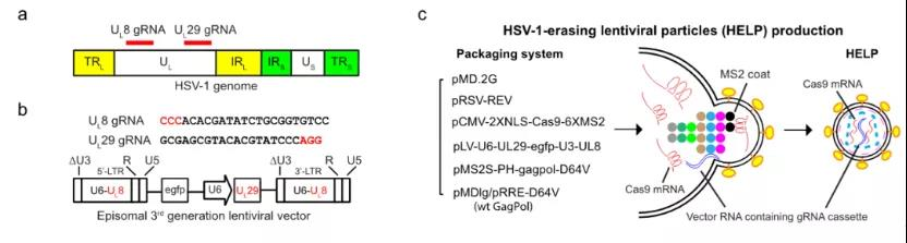 In vivo gene editing therapy by virus-like mRNA technology