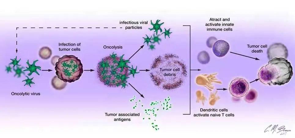 Can the new coronavirus (COVID-19) treat cancer? ?