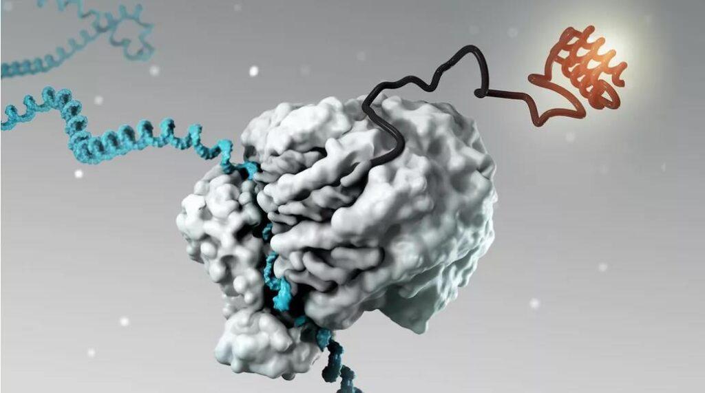 MIT: mRNA vaccines are selected as 2021 top ten scientific breakthroughs
