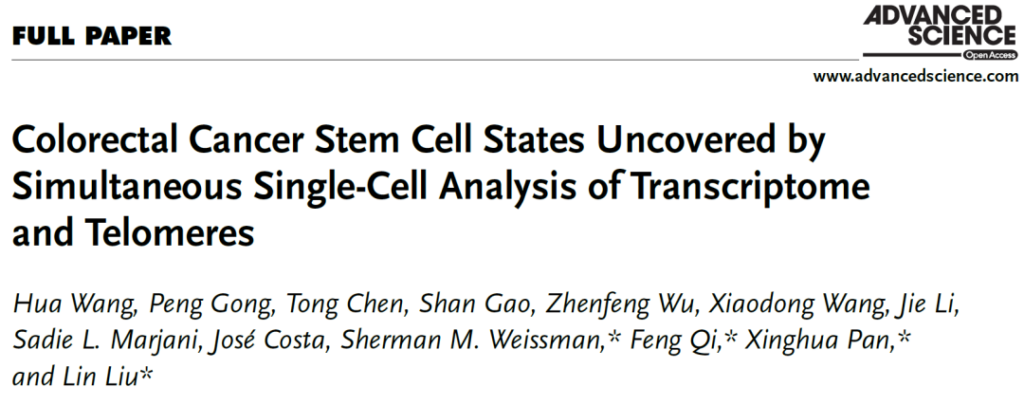 Resting tumor stem cells are the root cause of cancer recurrence and drug resistance
