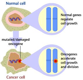 Oncogenes are genes that can cause cancer
