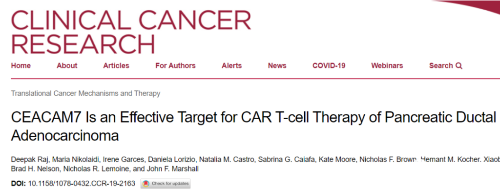 CAR-T therapy upgraded:  Finding effective targets to treat cancers