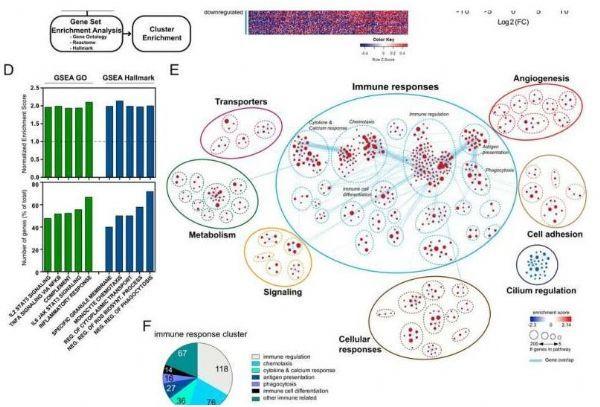 PNAS: The molecular mechanism of immune cells driving tumorigenesis