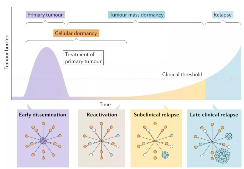 The concept and characteristics of dormant tumor cells