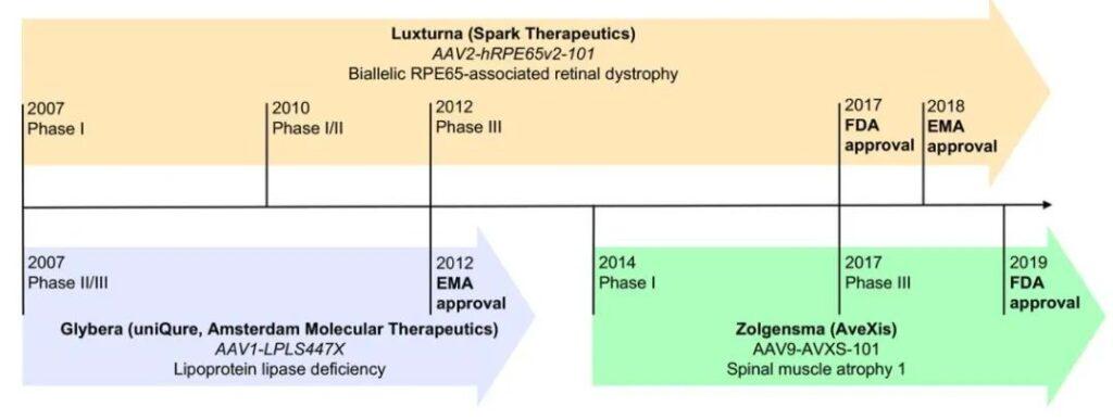 Progress and Future of adeno-associated virus in gene therapy