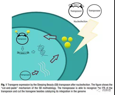 Three options for making chimeric antigen receptor T cells