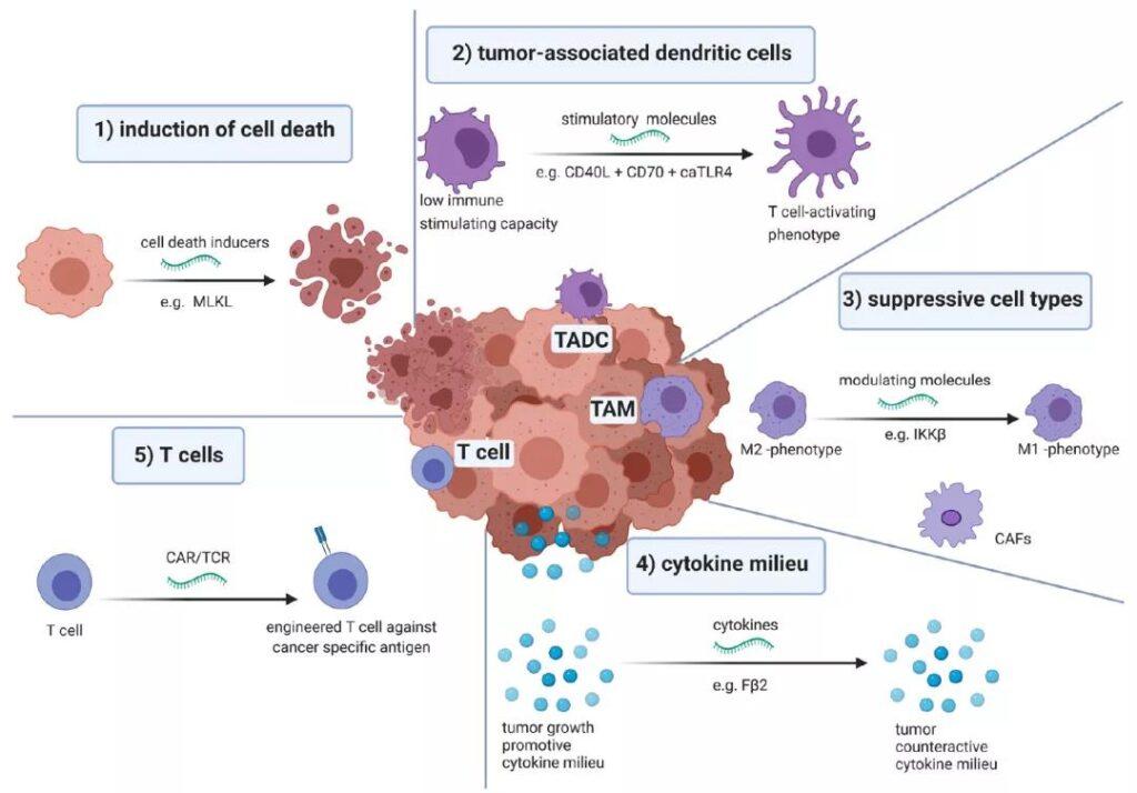 Many mRNA medicines other than mRNA coronavirus vaccine