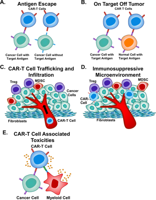 Nature: Current limitations and potential strategies of CAR-T cell therapy