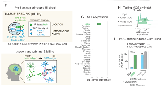 Challenges: Antigen recognition combination in Glioblastoma T cell therapy