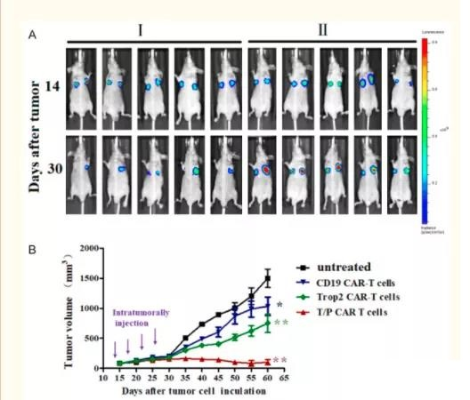 A new bispecific Trop2/PD-L1 CAR-T cell targeting gastric cancer