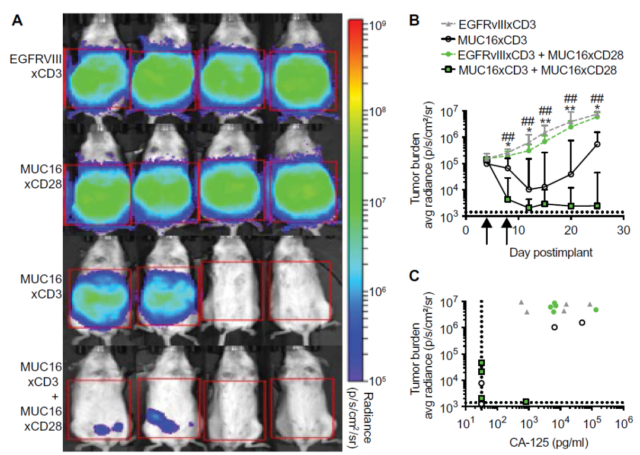 CD28 double antibody + CD3 double antibody = CAR-T?