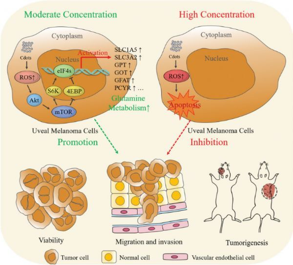 A new mechanism for ROS to regulate the occurrence of uveal melanoma