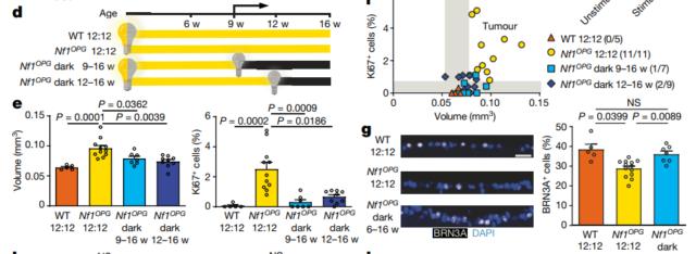 Neurofibromatosis type 1 gene mutation promotes growth of optic neuroma