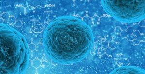 Stem cells repair motor neurons damaged by Amyotrophic lateral sclerosis