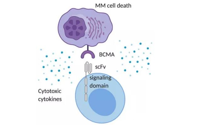 What's limitations of BCMA (B-Cell maturation antigen) CAR-T Therapy?