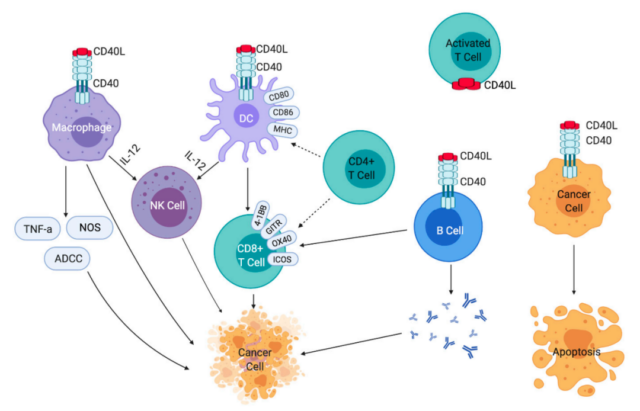 Four strategies for targeting tumor-associated macrophages