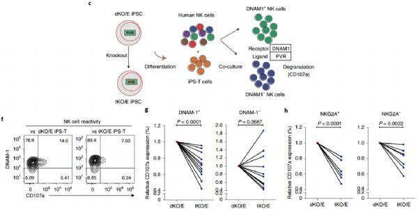 How to gene-edit ipsC to produce a universal cellular immunotherapy?