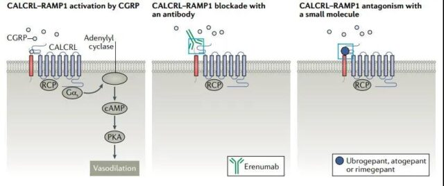 Is Targeting the GPCR receptor complex the new direction for drug discovery?
