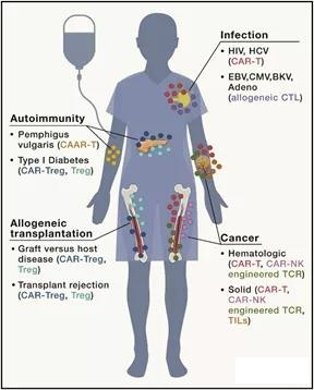 The emerging vision of immune cell therapy