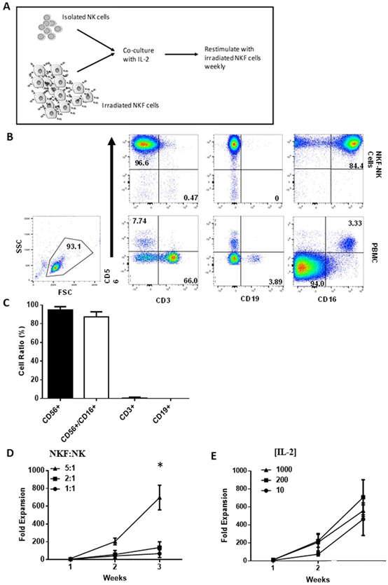 NK feeder cells of mIL-21 drive the strong expansion and metabolic activation