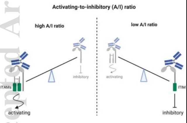 How to choose the subtype of antibody for tumor immunotherapy?