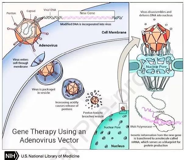 Summary of Mechanism and Strategy of Gene Therapy in Disease Treatment