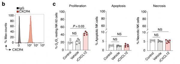 """Dormancy"" mechanism of tumor cells and preventing metastatic cancer"