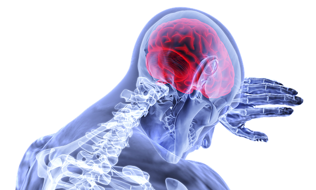 An unexpected discovery by Science Advances: Calcium can accurately guide blood flow in the brain