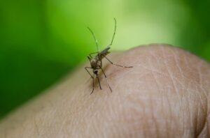 Nature: How to use live vaccines to eradicate malaria?