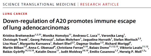 New checkpoint: A20 downregulation promotes lung cancer immune escape