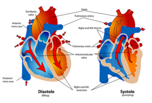 Research progress on post-translational modification of cardiac sodium channel Nav1.5.