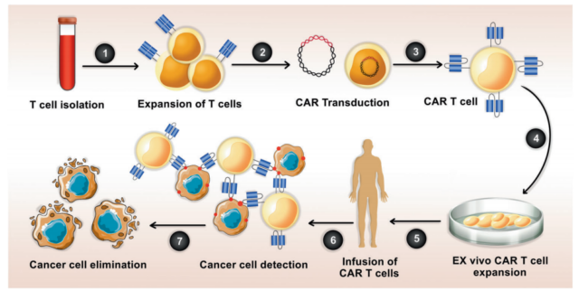 Immunotherapy: Combination therapy of CAR-T cells and oncolytic virus