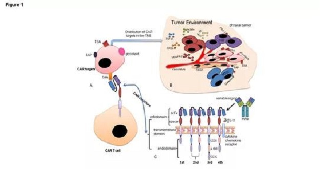 What are the types of targets for CAR-T cell therapy in solid tumors?