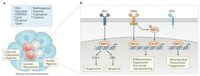 Tumor immunity: Suppressor cells from bone marrow