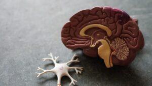 CRISPR gene editing has great potential for Alzheimer's disease