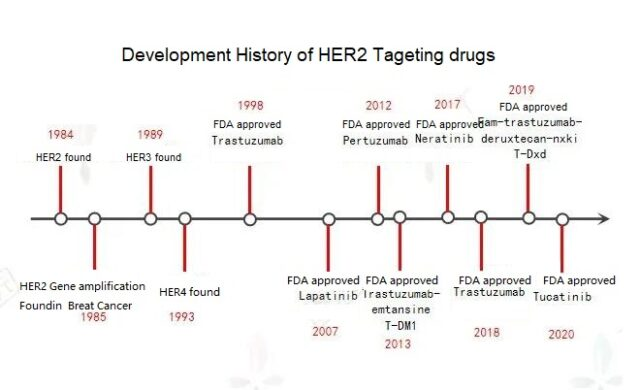 What are the commonly used HER2 targeted drugs for breast cancer?
