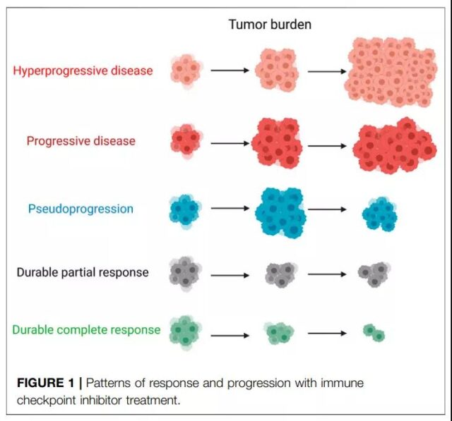 Hyperprogressive disease (HPD) in immune checkpoint inhibitor therapy