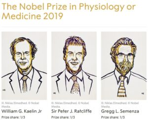 """Why could """"Cell Oxygen Perception"""" win the Nobel Prize?"""