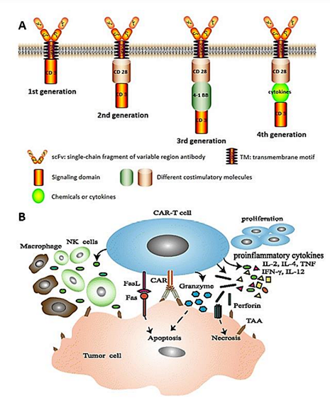 2020 New Immunotherapeutic drug technology FDA/EMA approved.