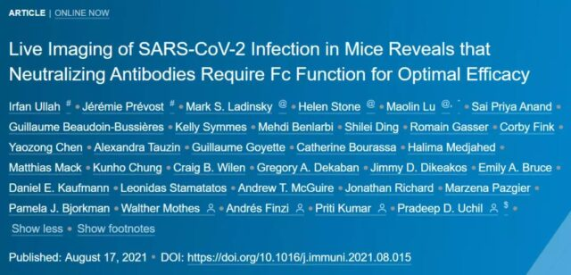 First time to record the whole process of COVID-19 infection in live animals