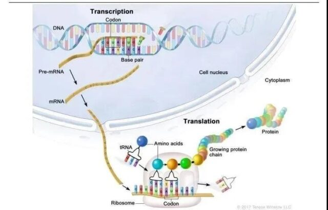 Technical challenges of developing mRNA COVID-19 vaccine
