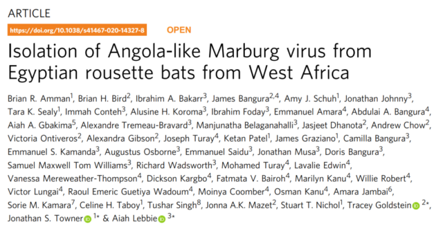 Death rate exceeds Ebola: First Marburg virus death in West Africa