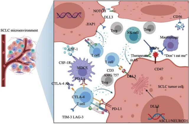 Progress of immunotherapy-related biomarkers for small cell lung cancer
