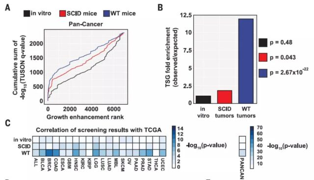 Tumor suppressor genes cause cancer by evading immune system monitoring after mutation