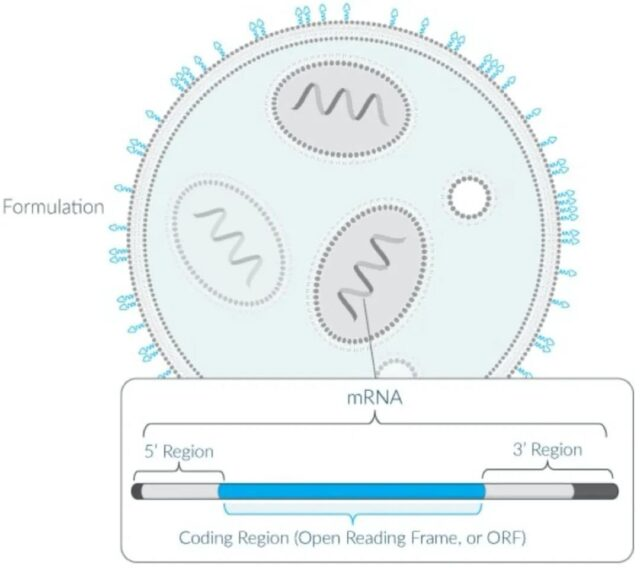 Will mRNA become the direction of the development of cancer drugs?