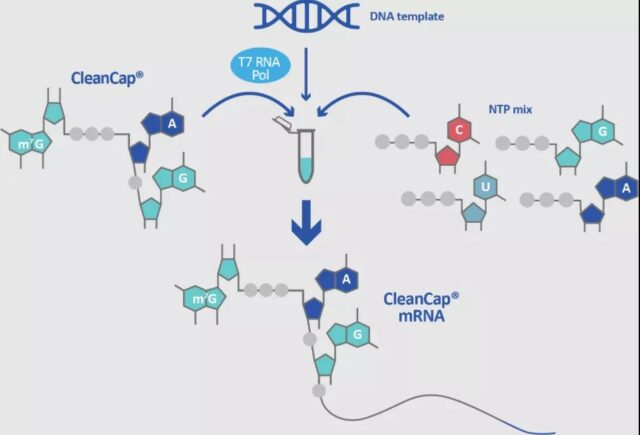 mRNA reviews: Sequence design | Delivery system | Clinical trials