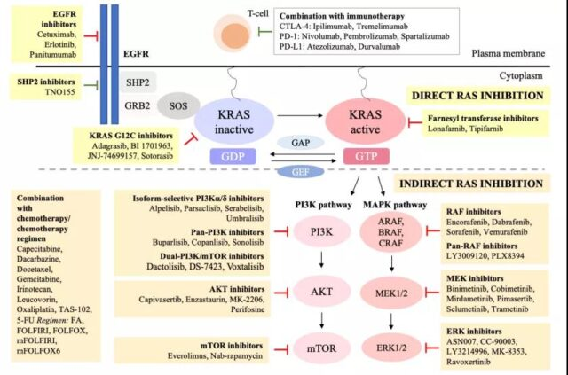 Colorectal cancer: Is there still no targeted drug for KRAS mutation?