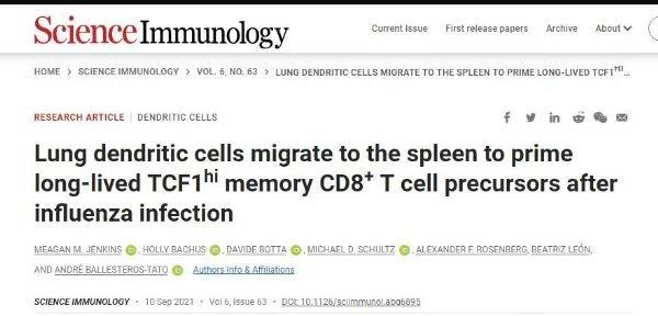 Memory killer T cells may be activated in spleen During influenza infection