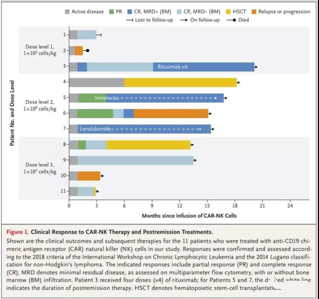 CD19 CAR-NK cell therapy for the treatment of positive lymphoid tumors